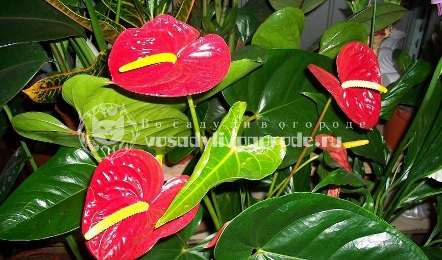 цветом, домашние цветы, фото