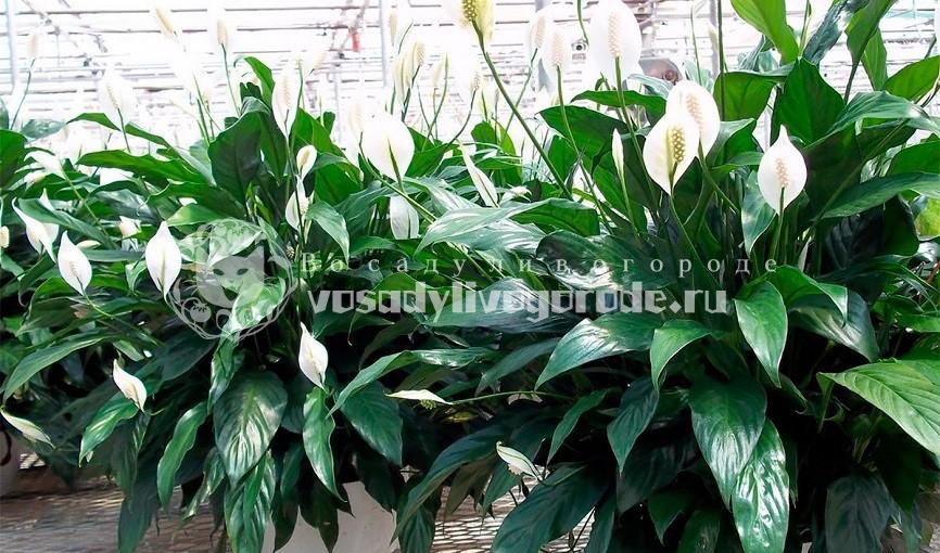 цветы, комнатные растения, фото