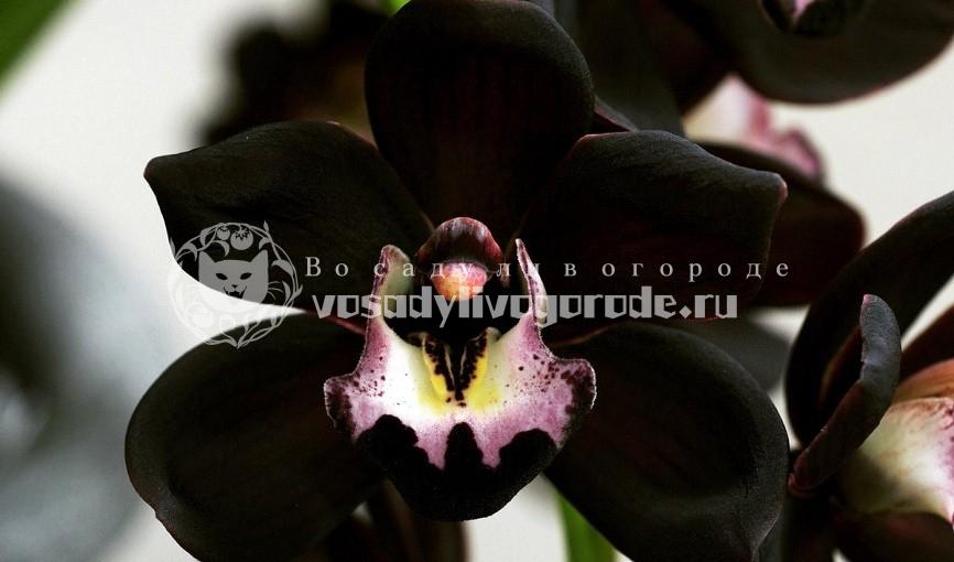 цветок, в горшке, купить, цена, фото
