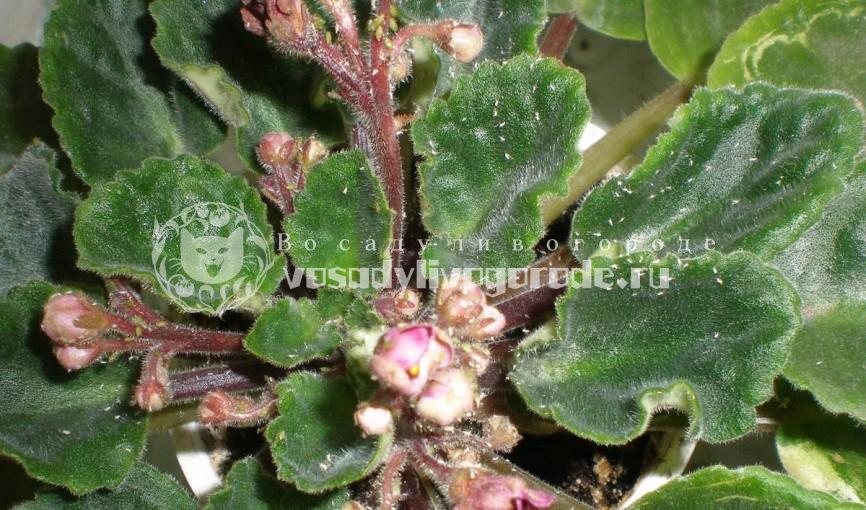 болезни, листьев, вредители, лечение, пятна