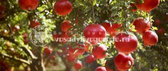 польза и вред, камень, фрукт, камаз, бутерброд, рекламное агентство, обыкновенная, фото, цена
