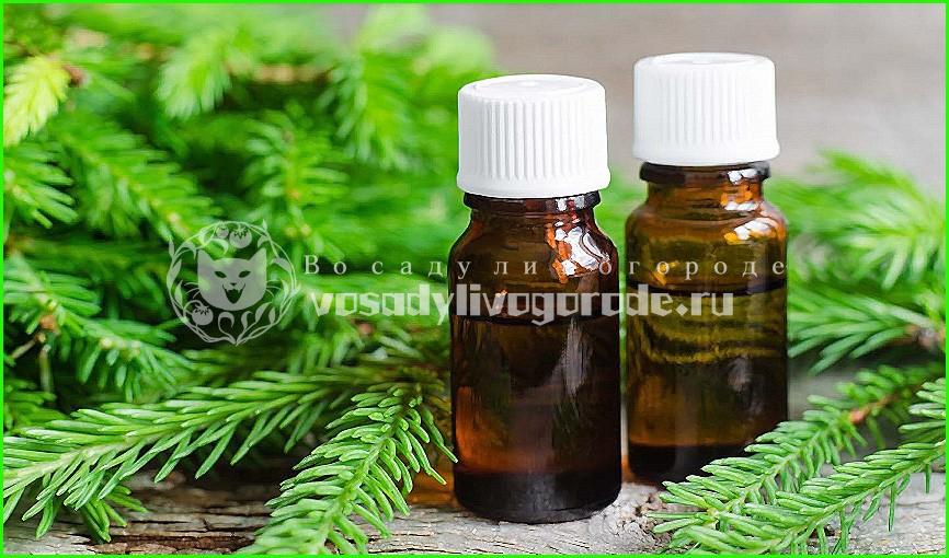 лечебные свойства, применение, купить, цена, для волос, рецепты, от кашля
