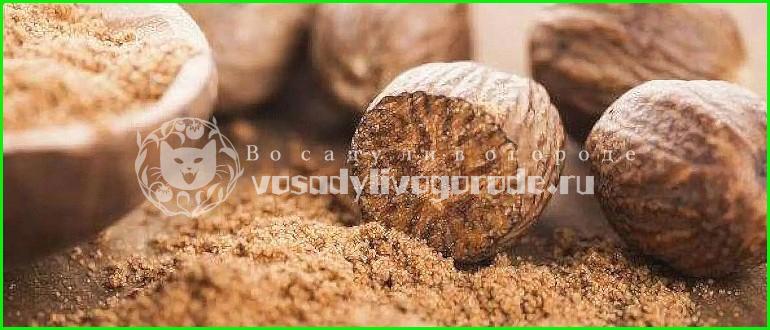 мускатный орех,вред,масло,молотый,в кулинарии,полезные,свойства,польза,применение,противопоказания
