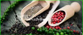 черный перец,как растет,вред,масло,специи,горошек,молотый,польза,состав,в домашних условиях,выращивание,противопоказания,растение,свойства