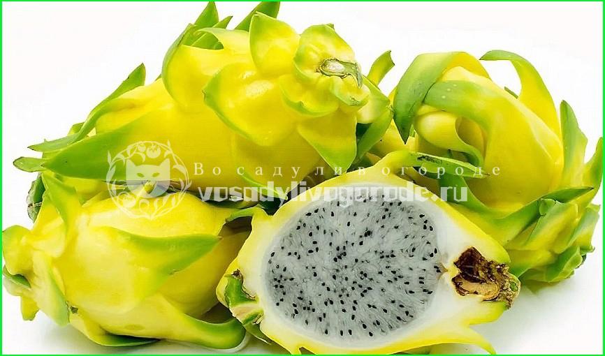 фрукт, глаз, как едят, вкус, чем полезен, калорийность, выращивание, на что похож