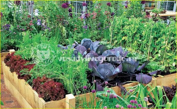цветы, овощи, совместные посадки, уход, болезни