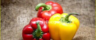сладкий перец,зеленый,красный,желтый,оранжевый,калорийность,описание,болгарский,польза,вред,противопоказания,свойства,состав,характеристика