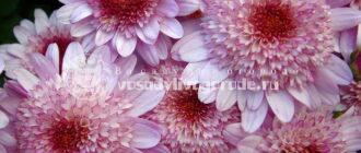 цветы, растения, посадка, уход