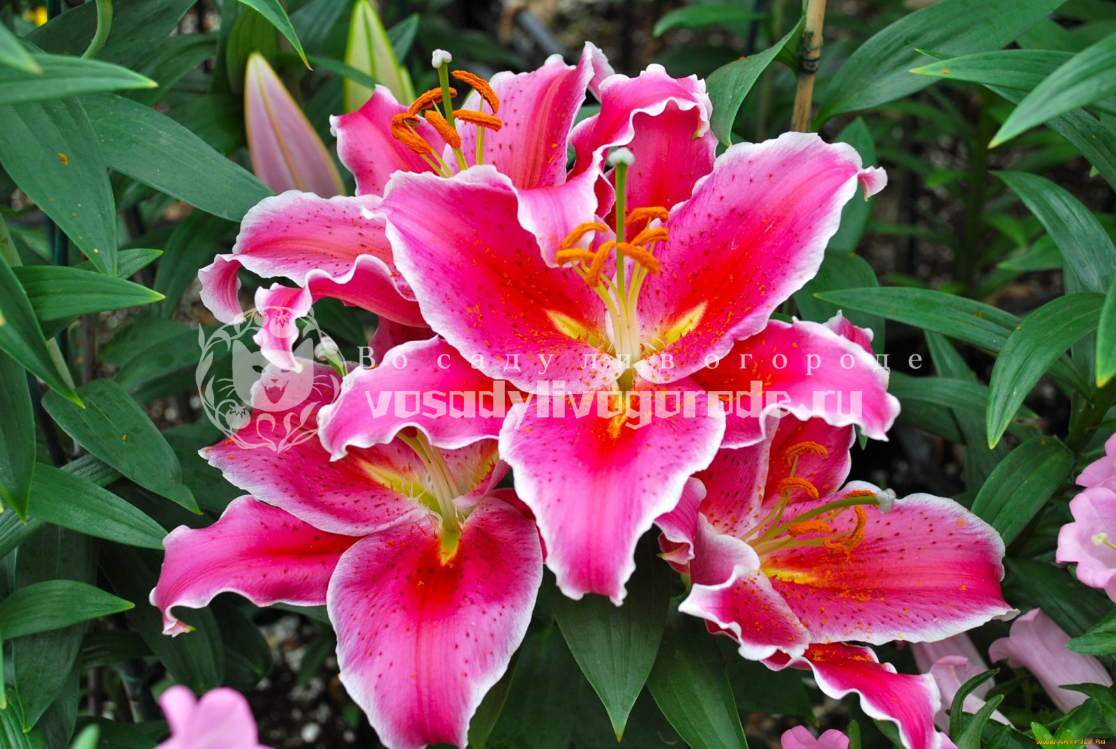 цветы, растения, уход, удобрение, полив