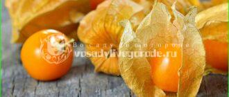 ягоды, полезные свойства, рецепты