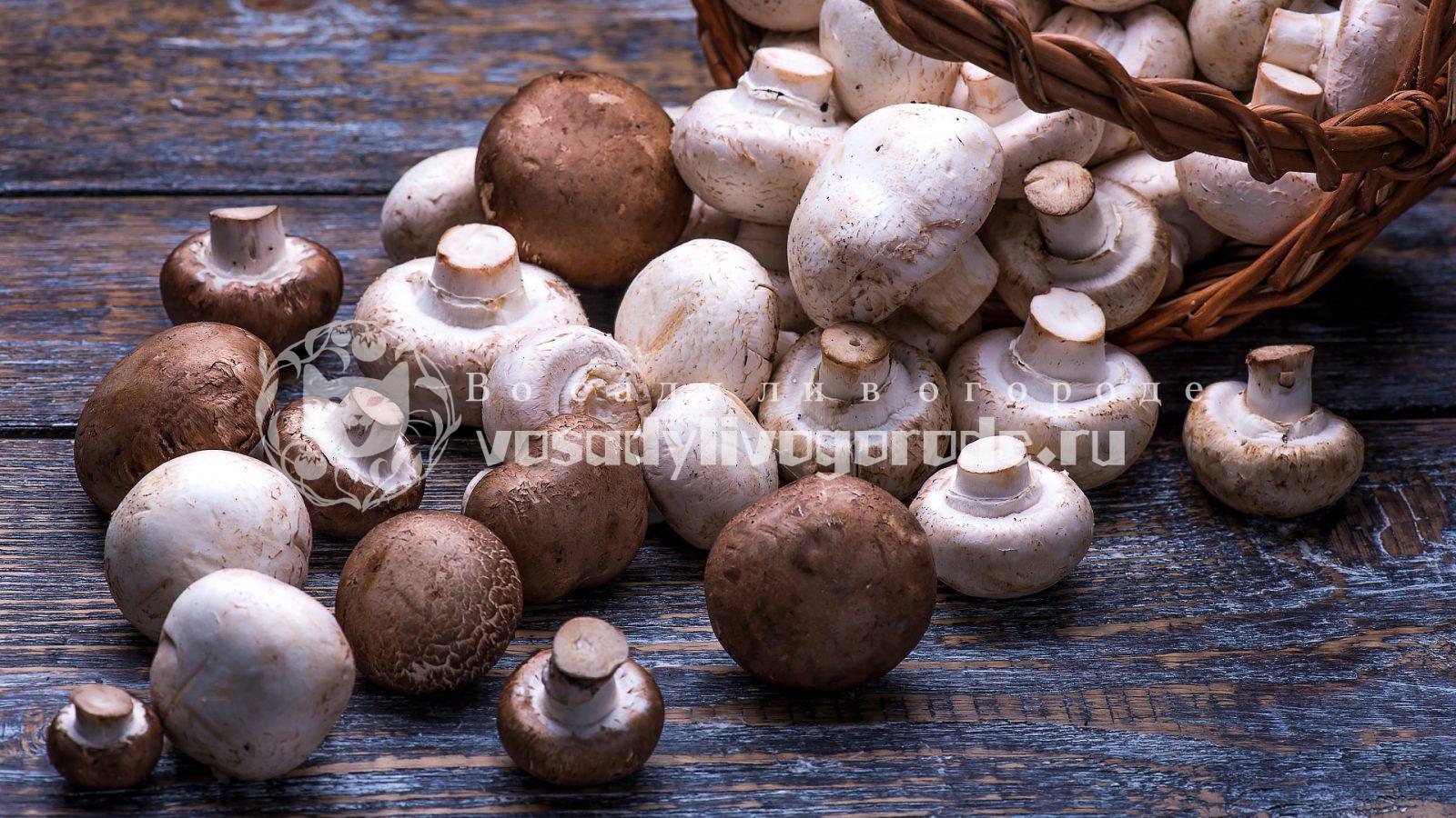 грибы, как вырастить, посадка, уход