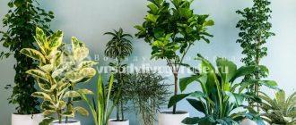 Растения для дома