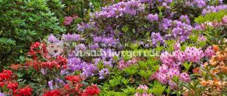Кустарники осеннего цветения