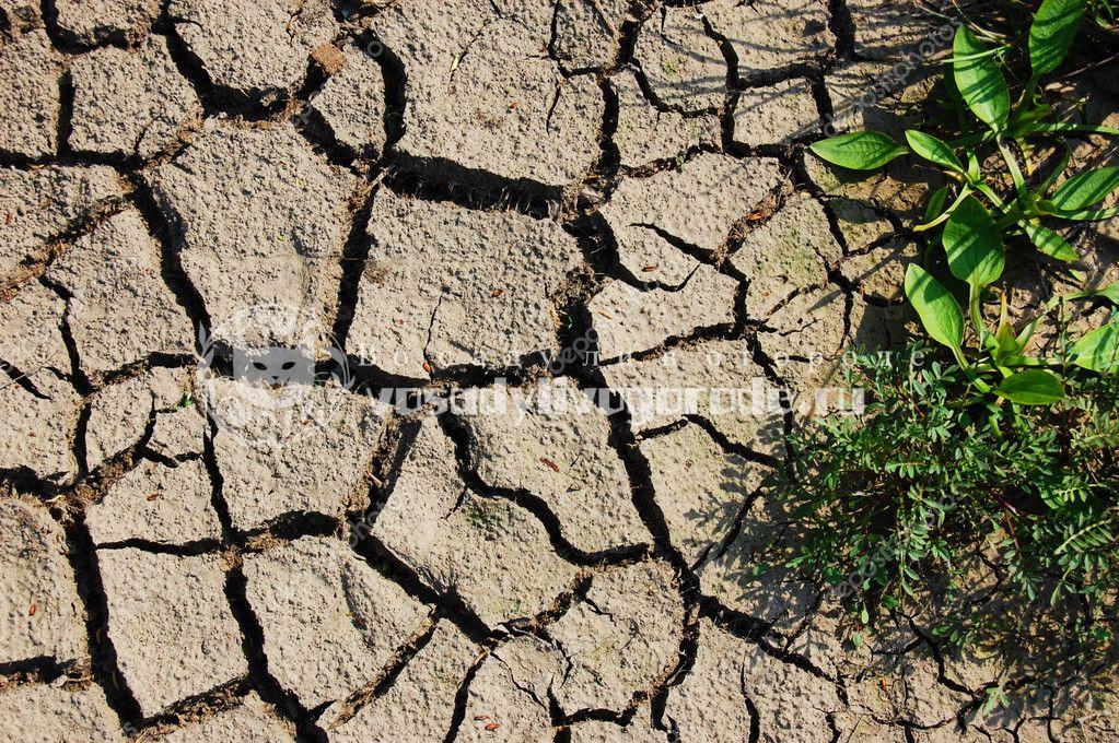 Сухая почва