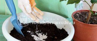 Как улучшить почвогрунт