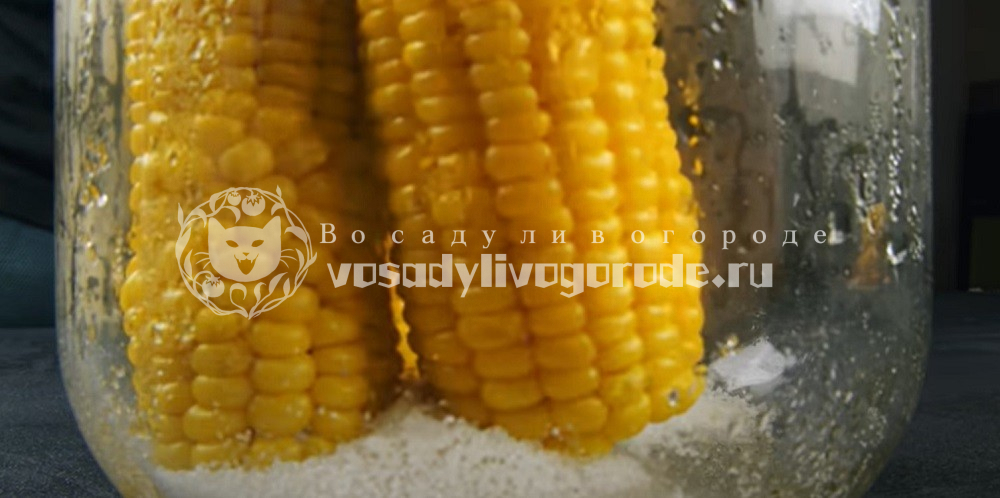 Уложить кукурузу в банку