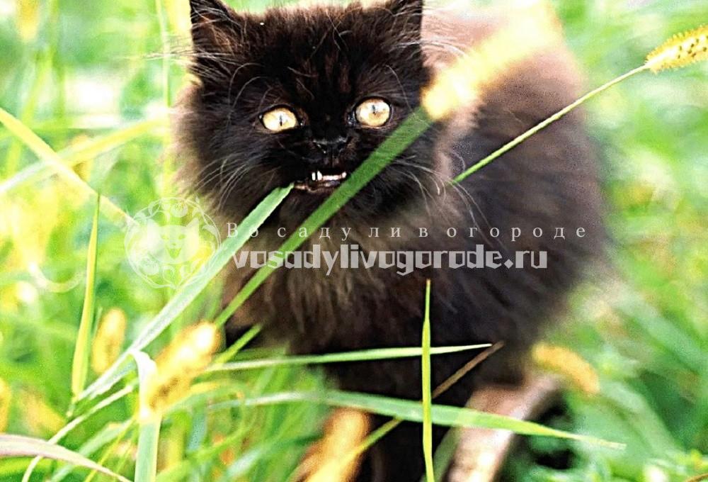 Котенок на природе фото 2