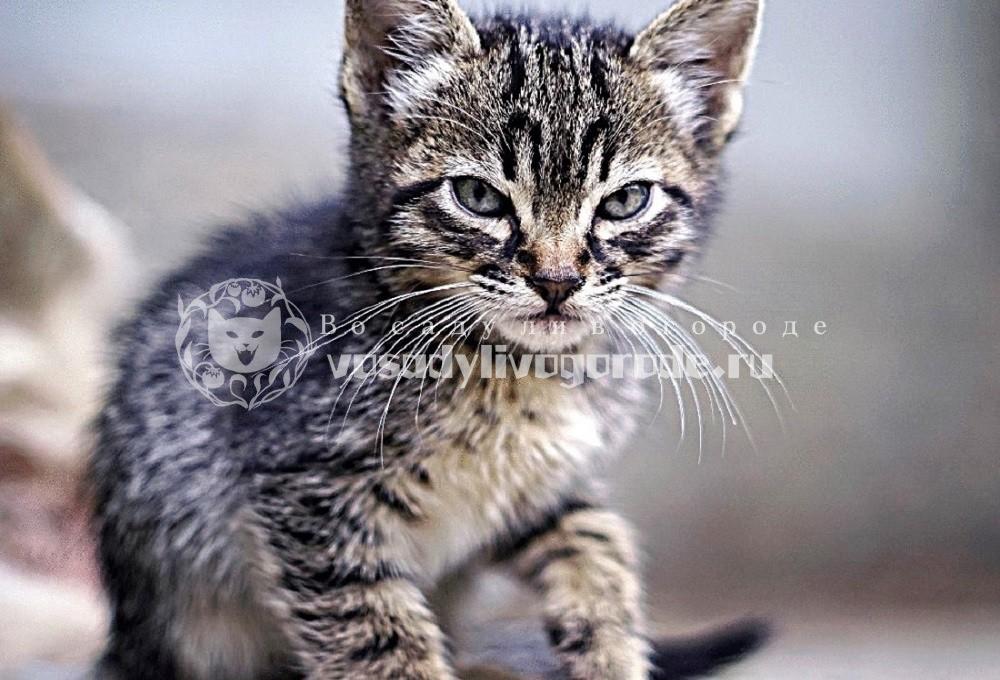 Злой котик