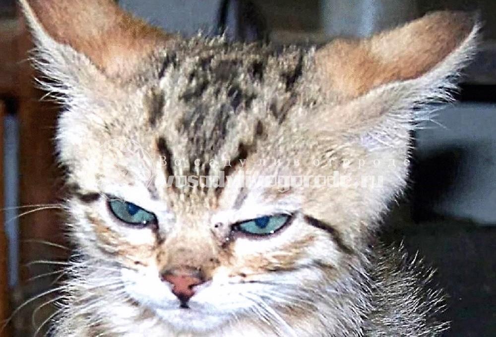 Злой котик фото 2