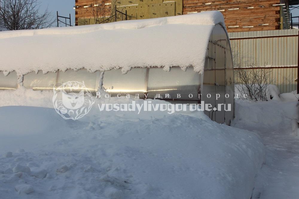 Теплица зимой фото 2