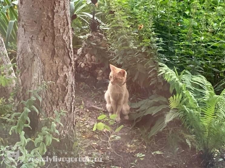 Рыжий кот в лесу